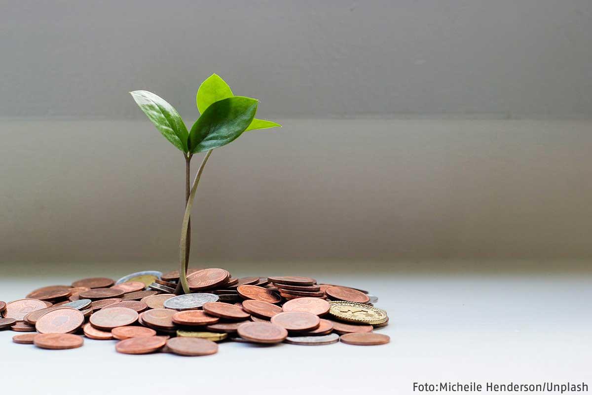 Eine kleine Pflanze wächst aus ein paar Pfennigen