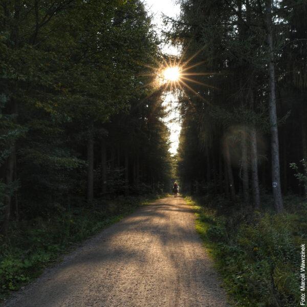 Fahrradweg im Wald mit Sonne