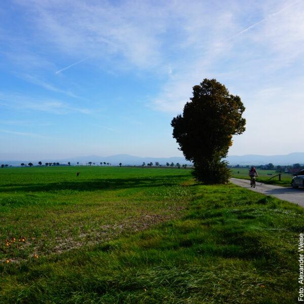 Fahrradweg vor grüner Wiese