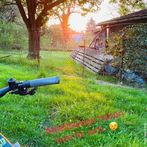 Sonnenaufgang vor grüner Wiese